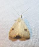 moth-21-06-2008-3.jpg