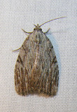 moth-21-06-2008-5.jpg