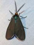 moth-21-06-2008-9.jpg