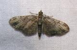moth-21-06-2008-10.jpg