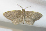 moth-21-06-2008-11.jpg