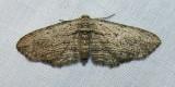 moth-21-06-2008-13.jpg