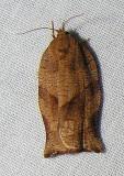 moth-21-06-2008-14.jpg