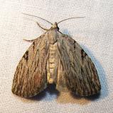 moth-21-06-2008-18.jpg