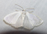 moth-21-06-2008-20.jpg