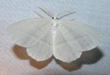 moth-21-06-2008-24.jpg