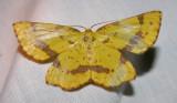 moth-21-06-2008-25.jpg