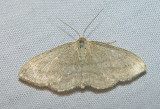 moth-21-06-2008-29.jpg