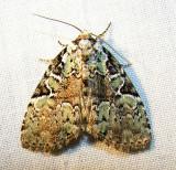 moth-060708-4.jpg