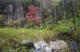 Pisgah N.F. Fall Color