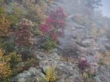 Sourwoods in Fog