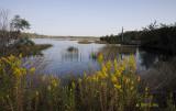 Huspah Creek Headwaters
