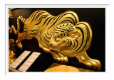 Gold Tiger - Osaka Castle