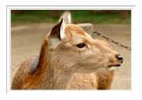 Nara Park 4