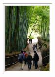 Bamboo Path - Arashiyama 1