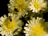 Bañados en polen / Swamps in pollen