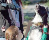 Singing dog.jpg