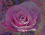 very abstract rose.