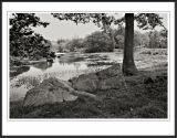 Mill Pond Durham