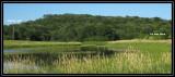 Osprey nest wide view