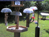 Red-winged blackbird, blue jay and hairy woodpecker