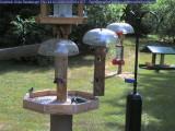 Chickadee and hairy woodpecker