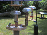 Blue jay and hairy woodpecker