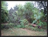 Fallen dead tree 2007