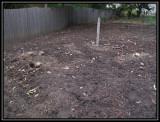 Fallen dead tree area 2009