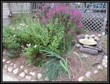 Patio garden 2009
