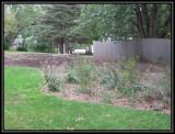 Back garden 2009