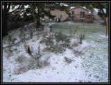 Snow garden 2009