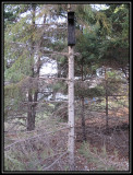 Owl shack