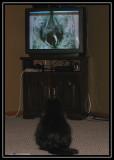 Rita watching chickadee TV