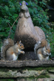 squirrels and a hen