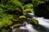 Ruckel Creek 2008-1