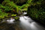Ruckel Creek 2008-2