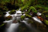 Ruckel Creek 2008-4