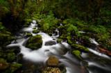 Ruckel Creek 2008-5