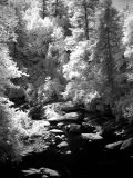 IR downstream - Cascades of Bull Pen