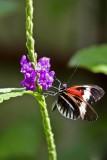 Butterfly World _002 .jpg