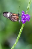 Butterfly World _005 .jpg