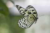 Butterfly World _007 .jpg