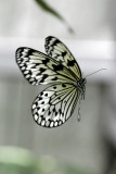 Butterfly World _009 .jpg