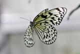 Butterfly World _010 .jpg