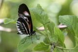 Butterfly World _012 .jpg