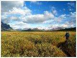 Tonquin Golden Field