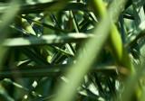 Palm Leaves Mish-mash
