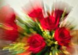 Red Roses Dream
