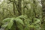 Chasm S Island NZ.jpg